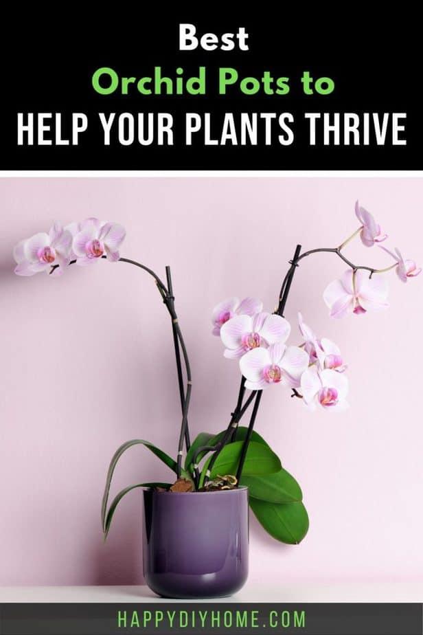 Best Orchid Pots 2