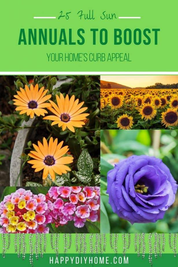 Full Sun Annuals 1