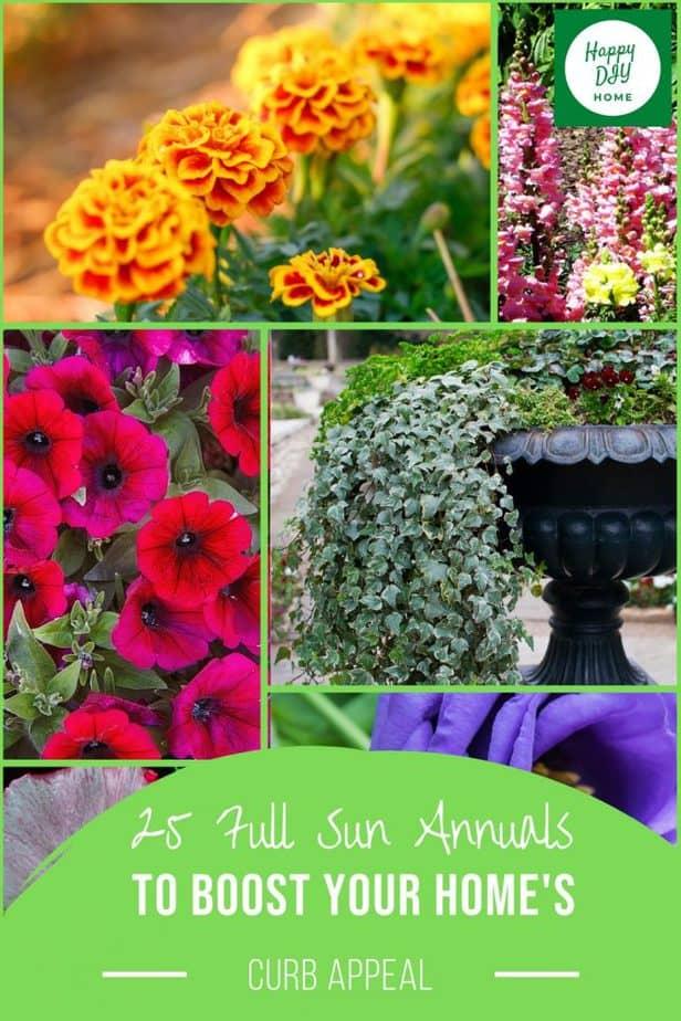 Full Sun Annuals 2