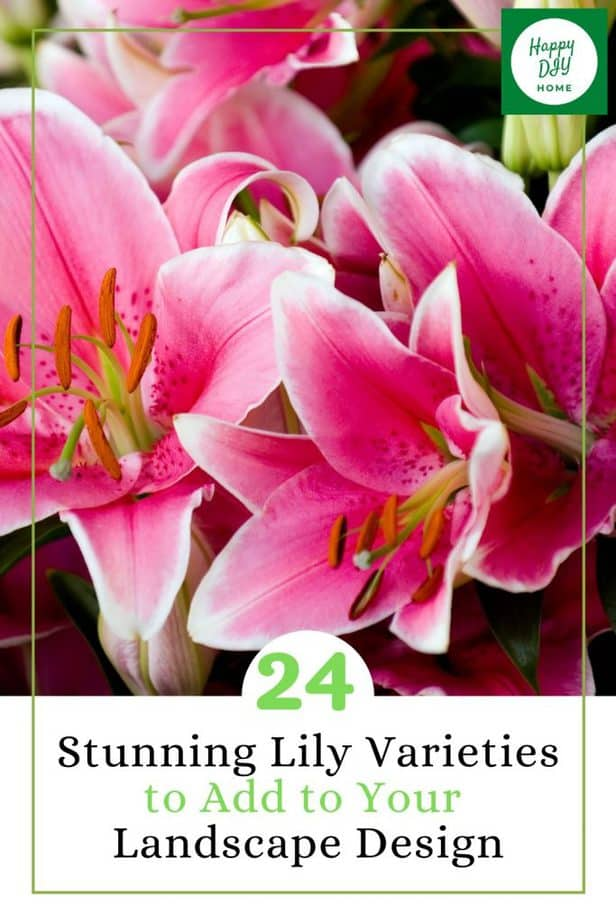 Lily Varieties 1