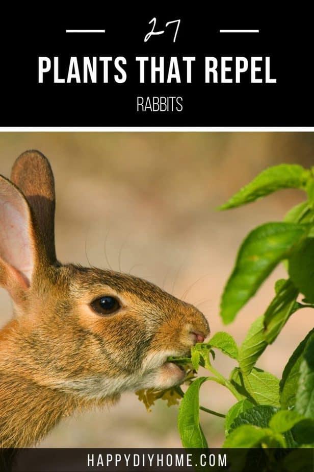 Plants That Repel Rabbits 1