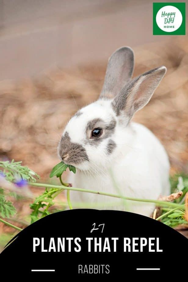 Plants That Repel Rabbits 2