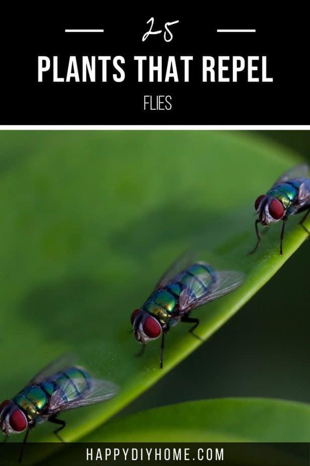 Plants that Repel Flies 1