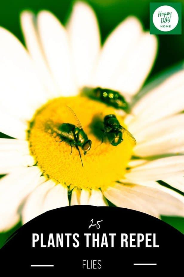 Plants that Repel Flies 2