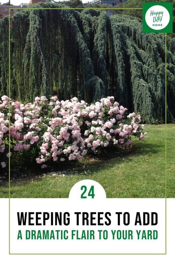 Weeping Trees 1