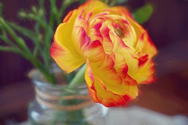 10 Cut Ranunculus in Jar