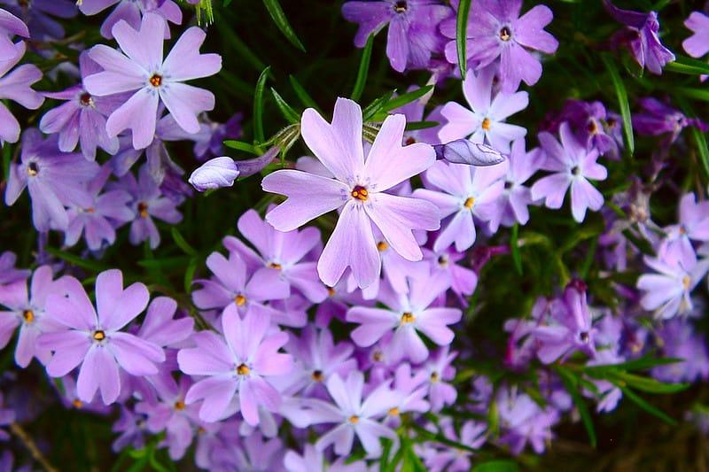 13 Garden Phlox