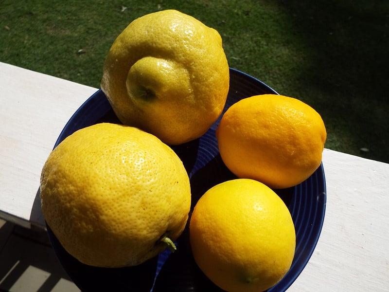 2 Ponderosa Lemon