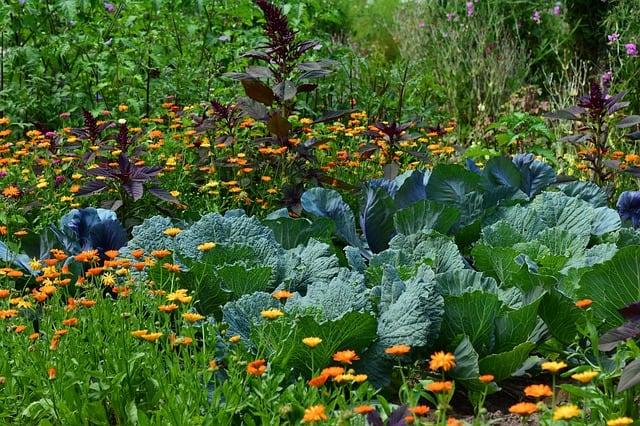 3 Vegetable Garden