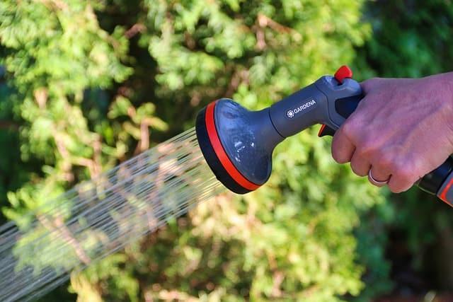 5 Keep Calibrachoa well watered