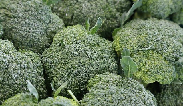 7 Growing broccoli is easy and rewarding