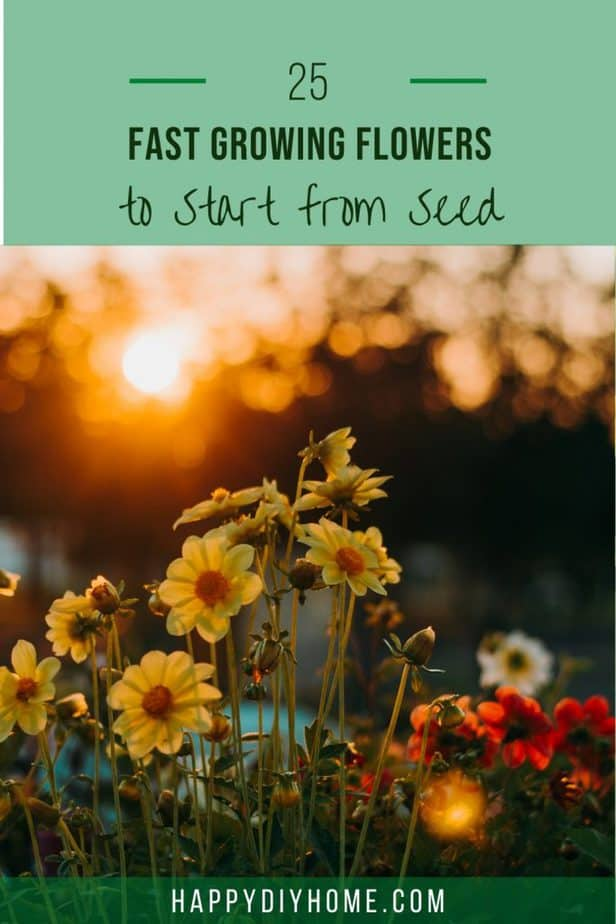 Fast Growing Flowers 1