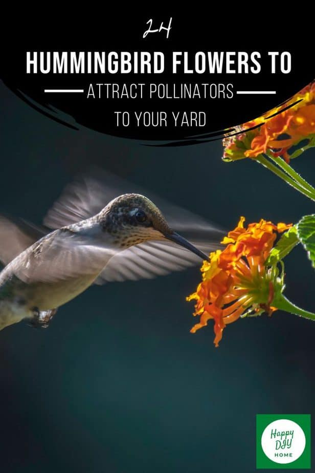 Hummingbird Flowers 2