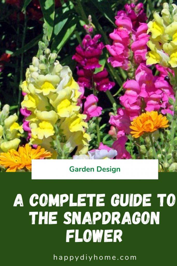 Snapdragon Flower 1 1