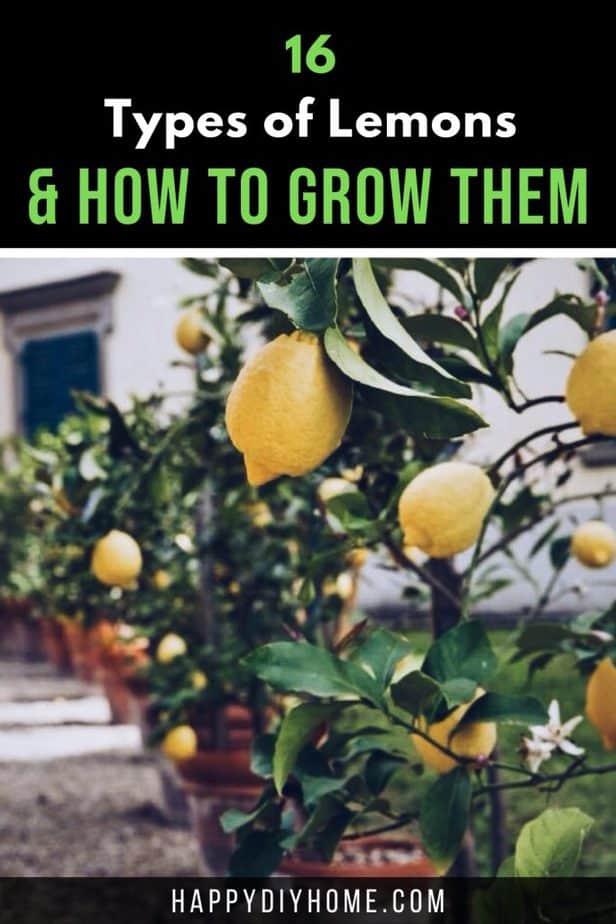 Types of Lemons 2