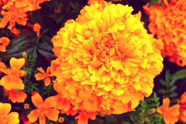 1 Bright colorful easy to grow