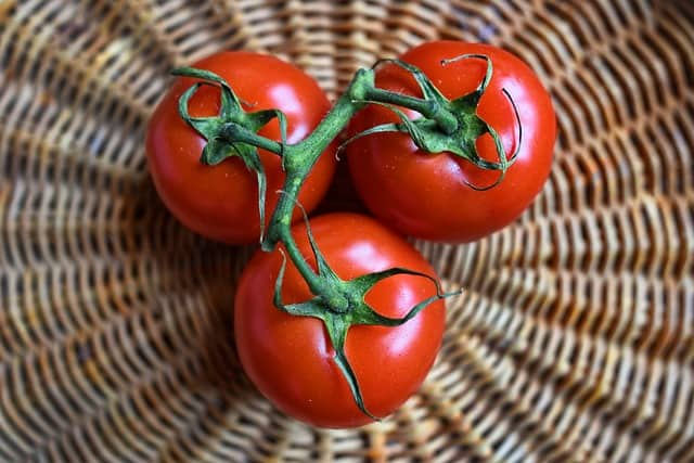1 Fresh Tomatoes