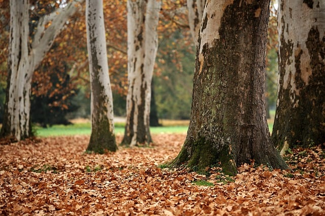 1 tree bark