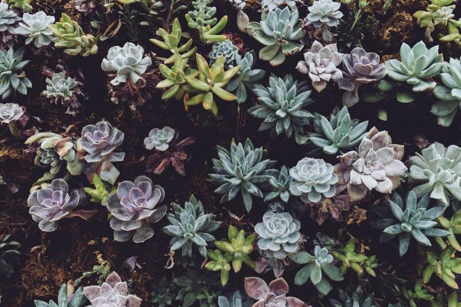 1. Succulent Care