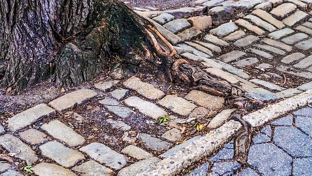 2 uprooted sidewalk