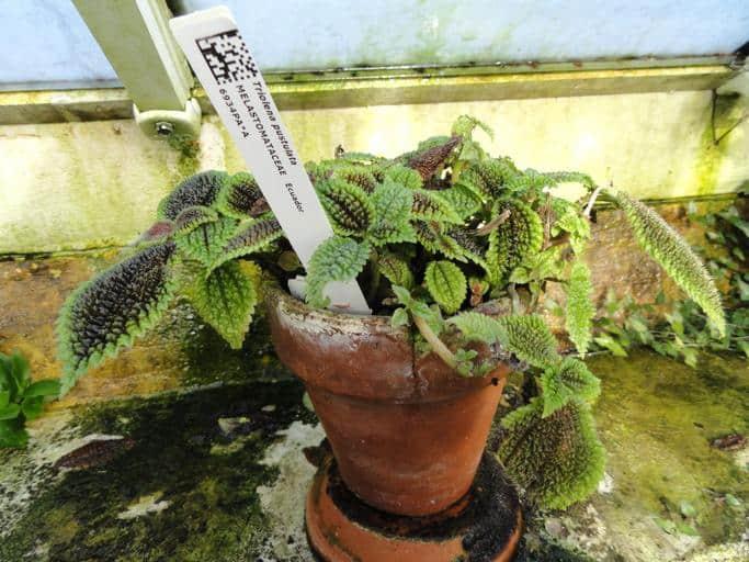 21. Friendship plant