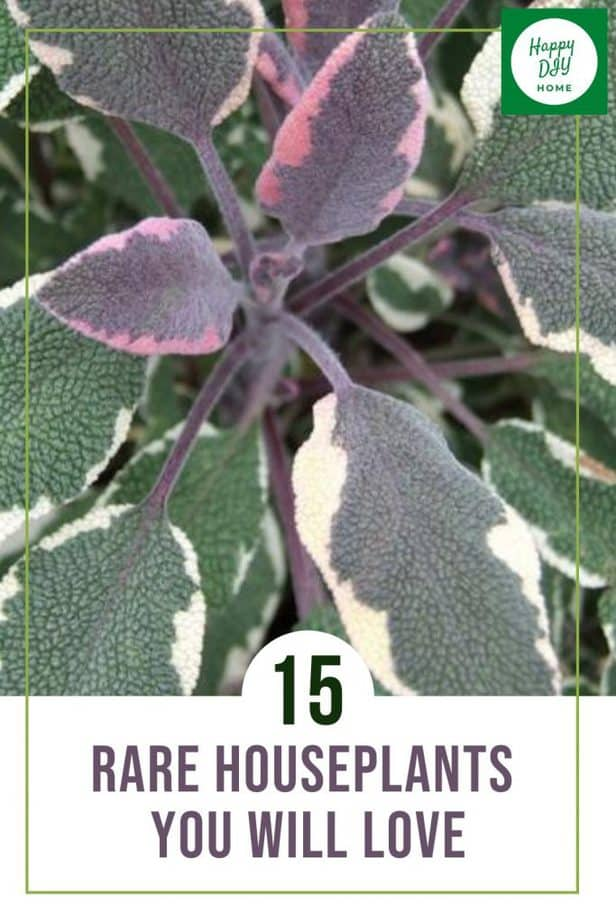 22. Rare Houseplants