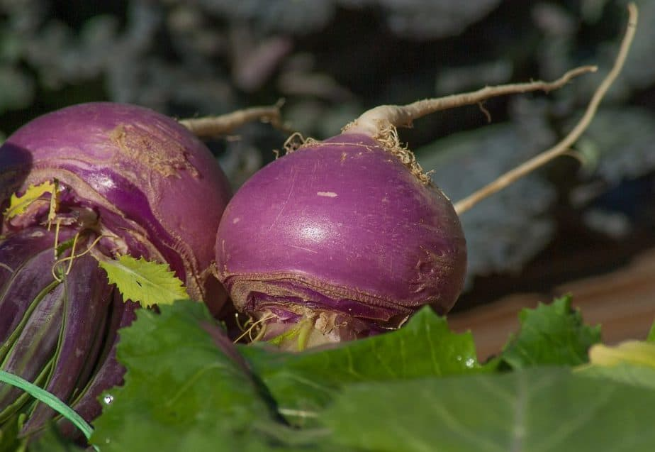 3 Purple Turnips