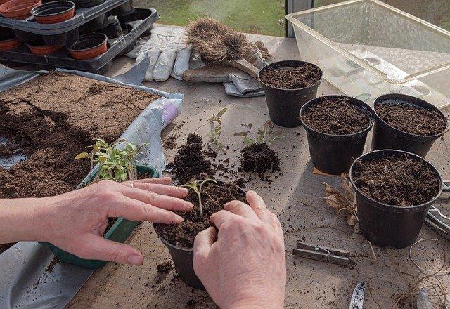 3 Start seeds undercover
