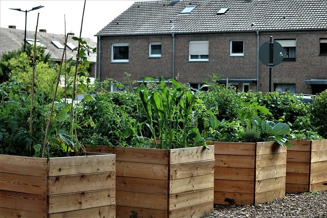 3 You can grow in raised beds