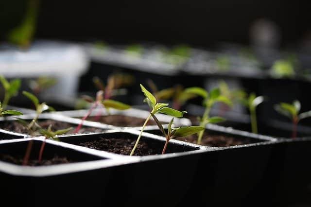 4 Start seeds undercover