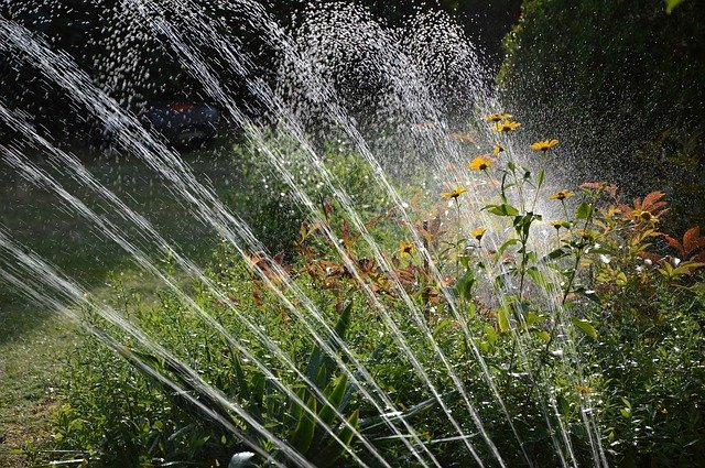 4 Water regularly to cool plants down