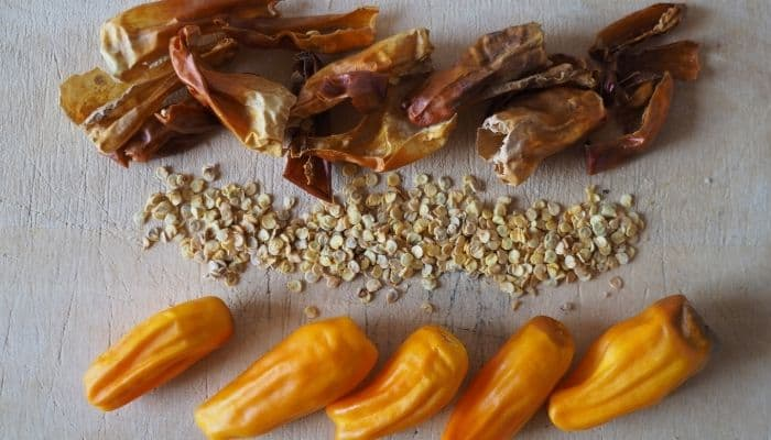 5. Fully ripened habanero peppers contain viable seeds