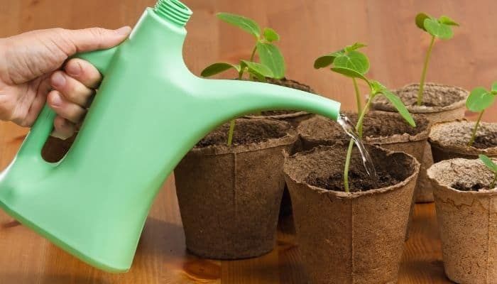 9. Make sure soil is moist before applying any fertilizer
