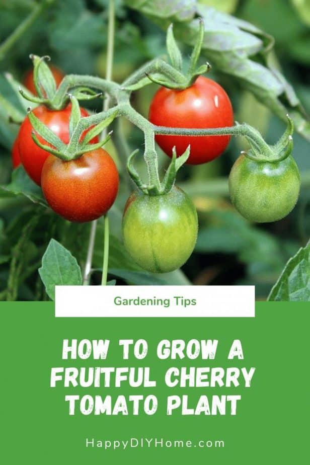 How to Grow a Fruitful Cherry Tomato Plant