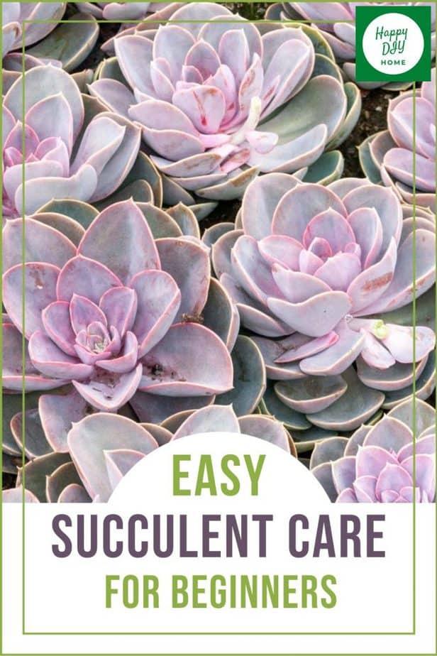 succulent care 1