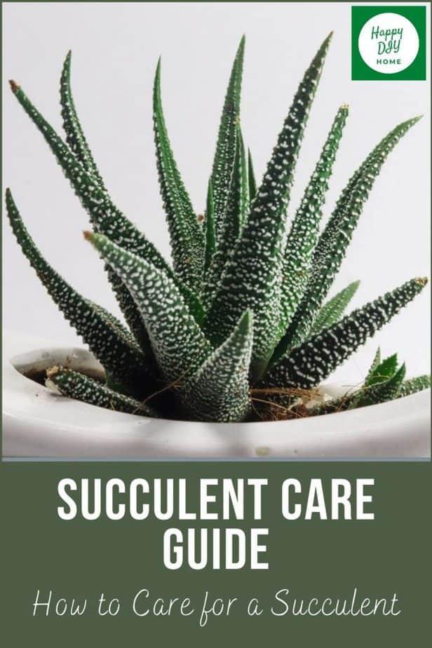succulent care 2