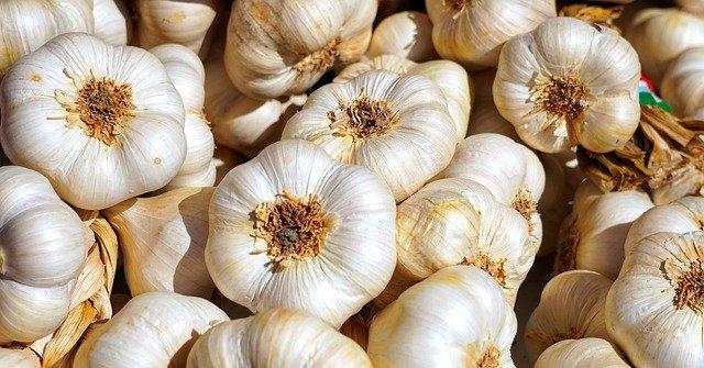 1 Growing garlic is easy