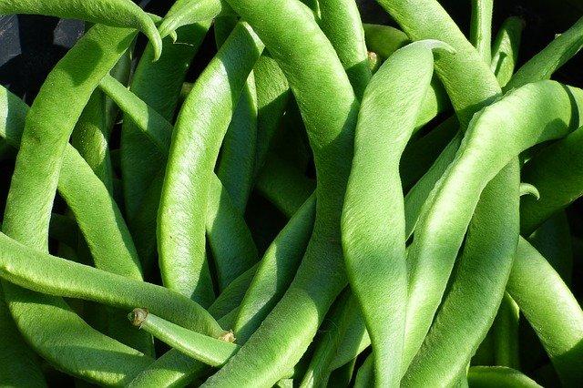 1 Low maintenance green beans