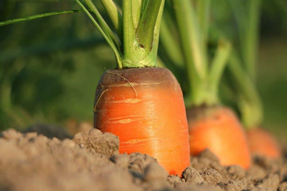 20 Carrots