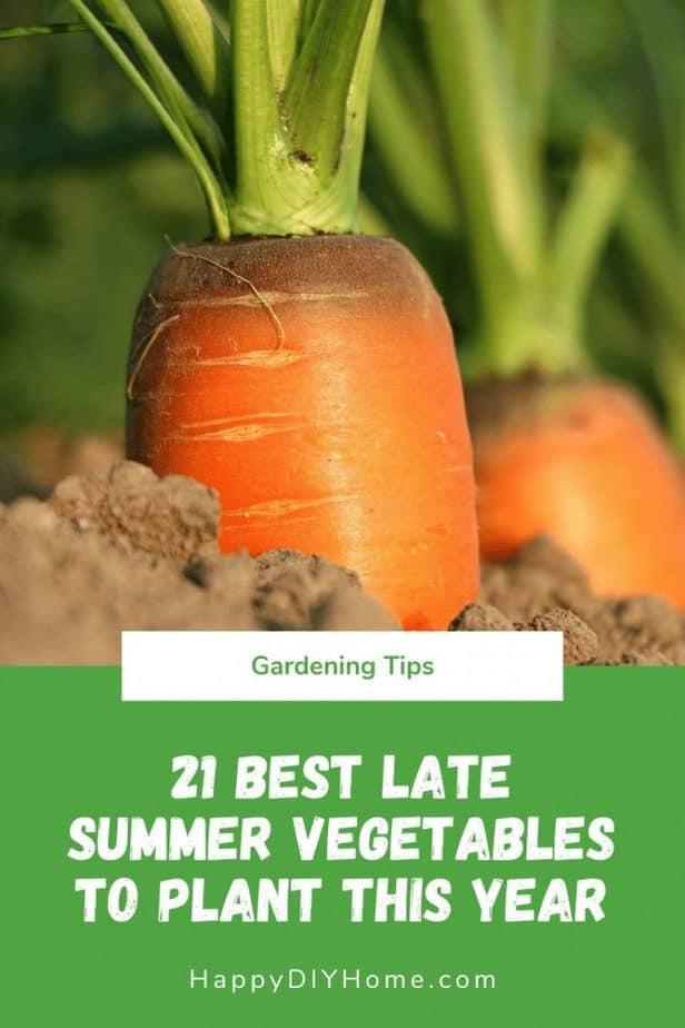 21 Best Late Summer Vegetables