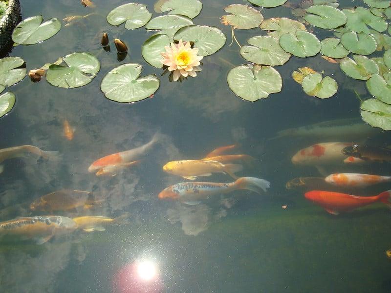 3 Pond Plants