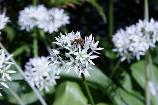 6 Flowers attract pollinators
