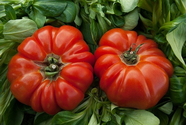 1 Bright juicy big beef tomatoes