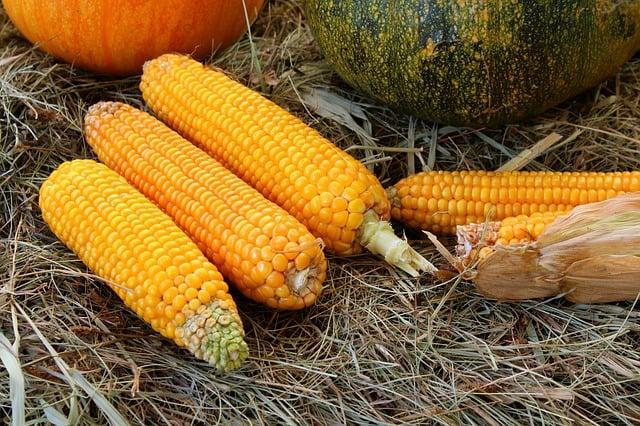 1 Corn on the Ground