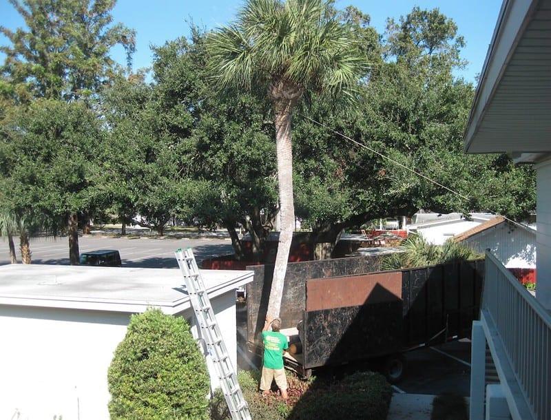 1 Palm Tree Removal Process