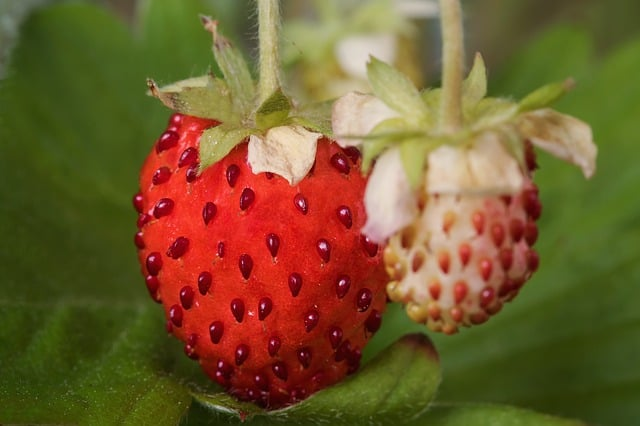 2 The small aromatic fruit