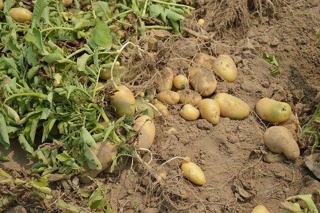 3 Re bury crops underground