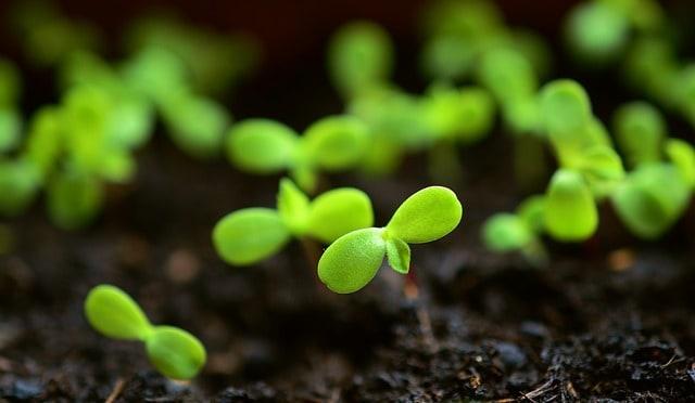 3 Seedlings