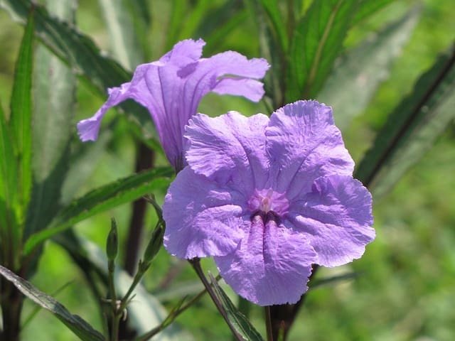 5 Plants flower throughout the summer