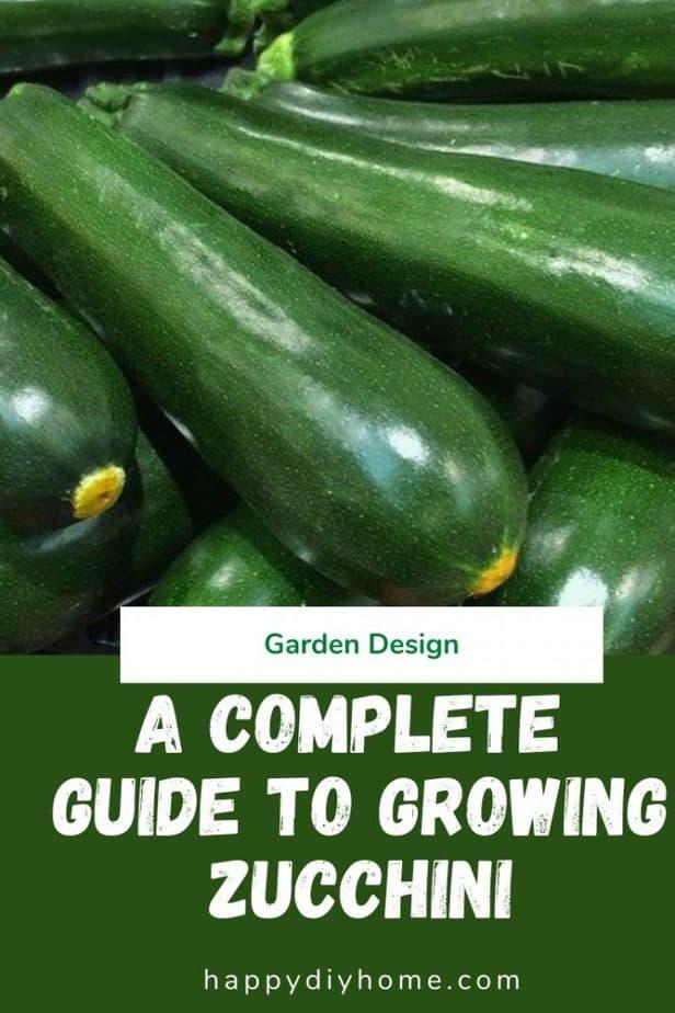 Growing Zucchini 1